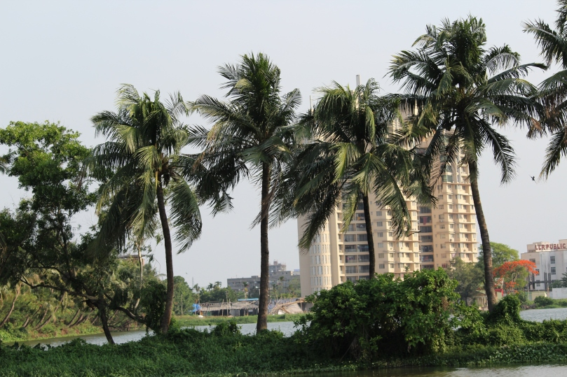 Coconut trees in the wind.