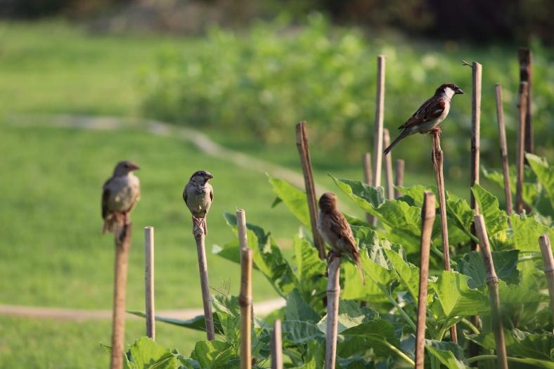 Birds at Victoria Memorial.