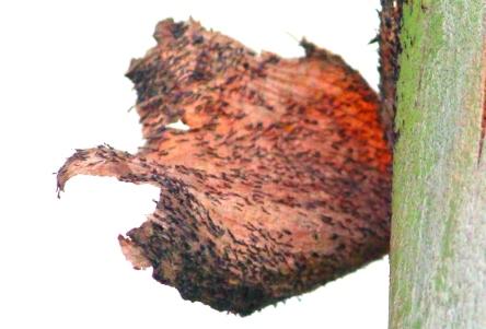 Tree bark amplified.