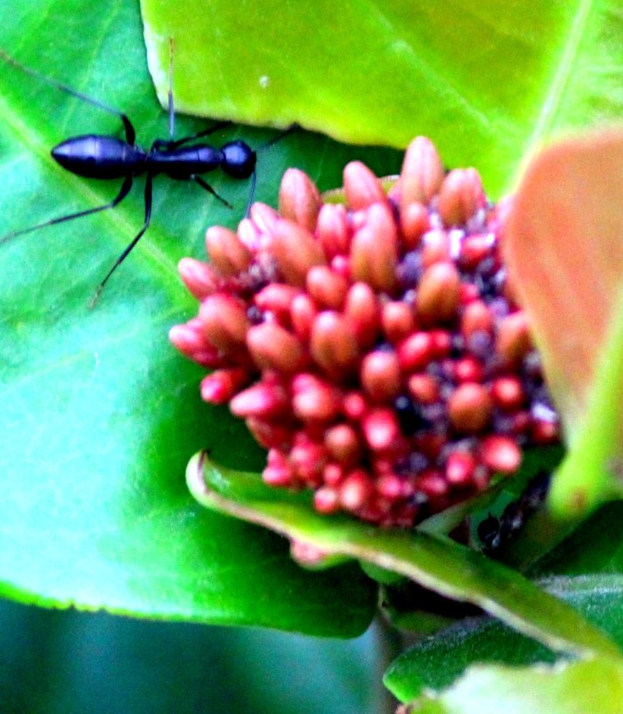 Ant- zoom in.